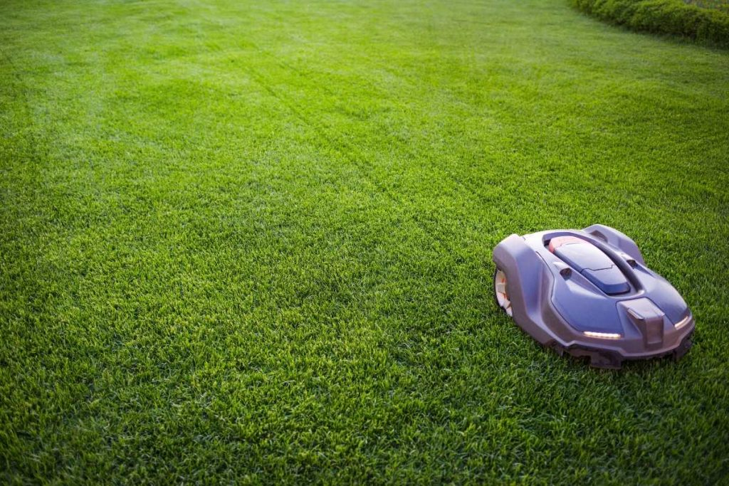 Robot lawn mower working on green grass