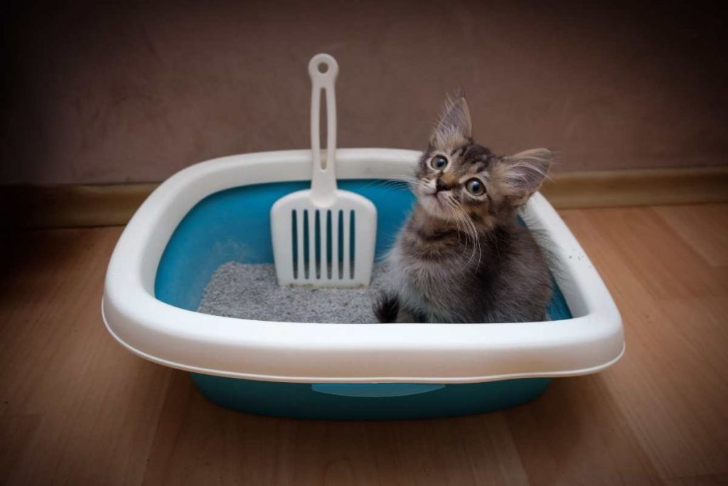 Cat sitting in a water bath looking cool