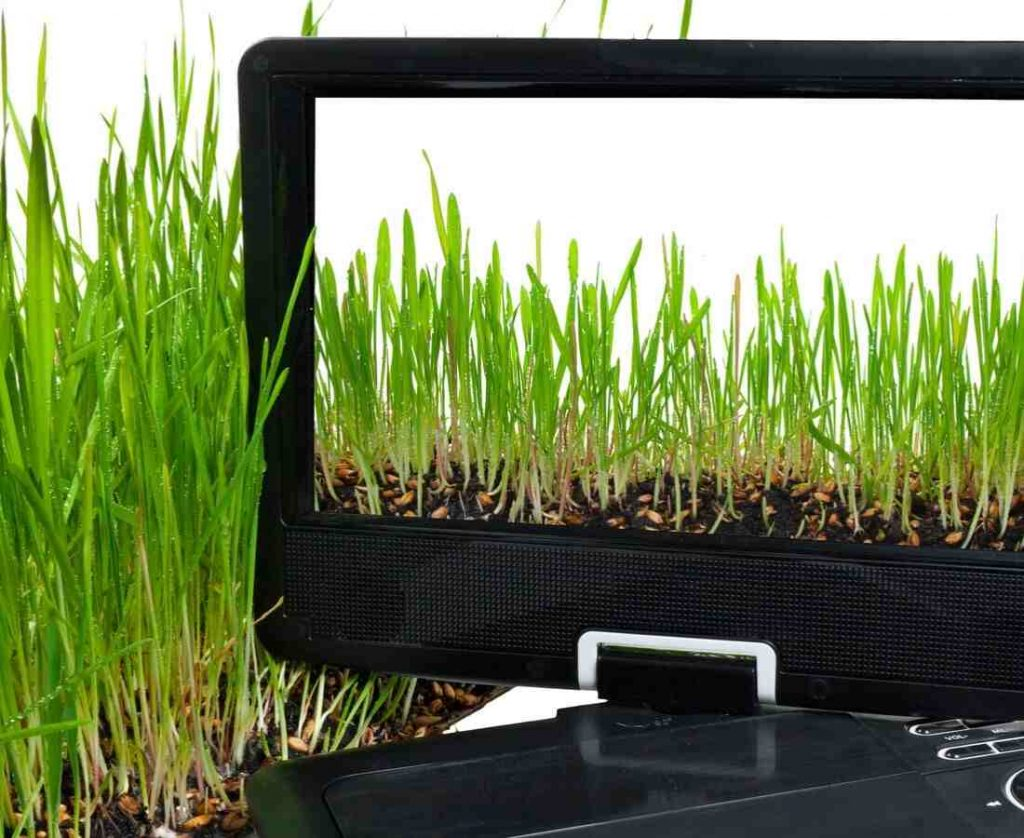 Portable DVD player with green leaves in screen