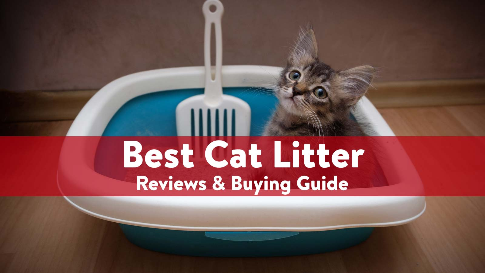 Best Cat litter