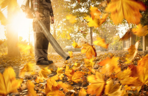 Overview of the Cordless leaf blowers