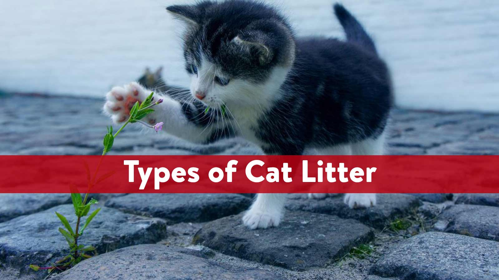 types of cat litter