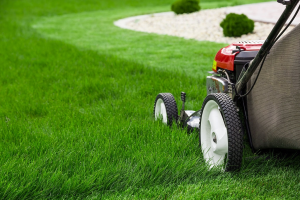 Which Riding Lawn Mower Should You Choose
