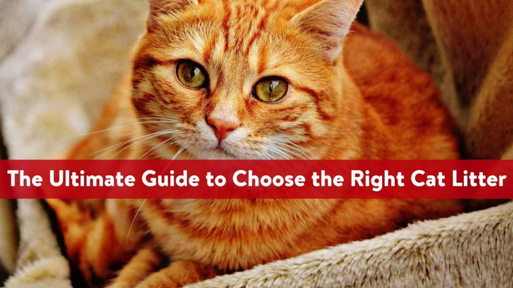 The Ultimate Guide to Choose the Right Cat Litter