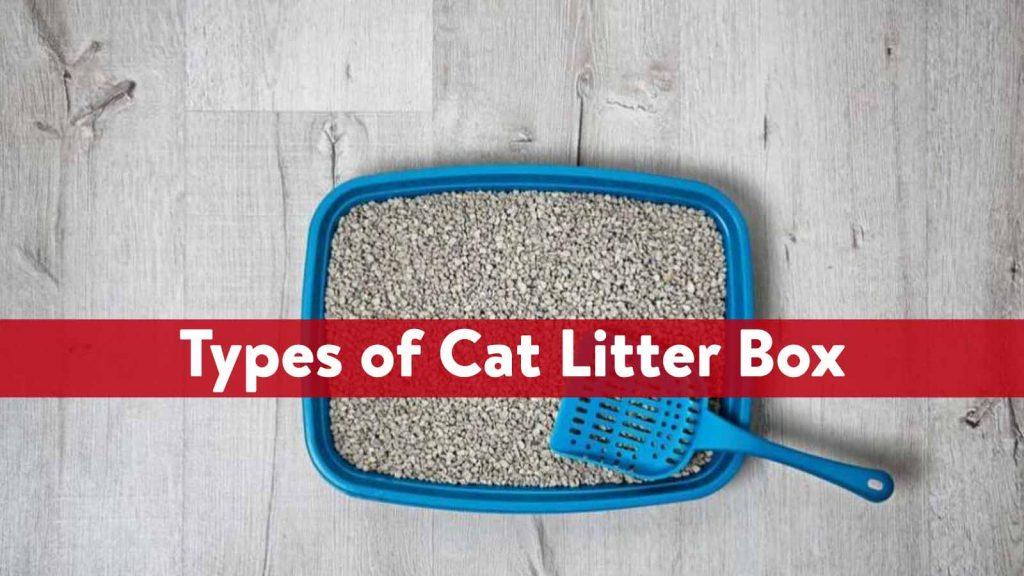 Types of Cat Litter Box